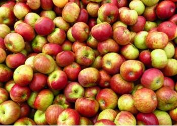 Куплю яблок и хрена оптом.
