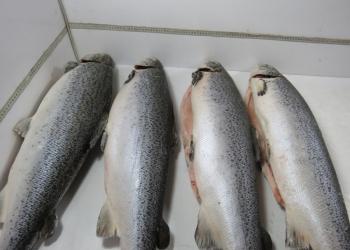 Рыба, морепродукты оптом!