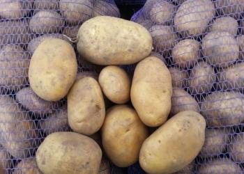 Картофель сорт Уладар, калибр 5+,  в наличии другие сорта.