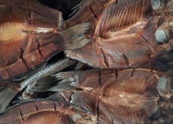 Рыба Вяленая  и холодного копчения, принемаем заказы на осень