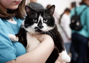 Ласковый кот Щекан ищет дом