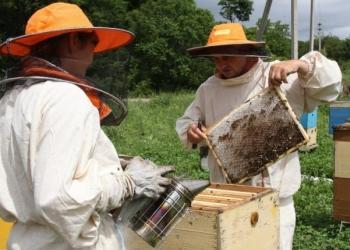 Курсы Пчеловодство