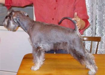 Стрижки и тримминг собак