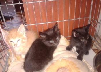 3 котёнка 2 мальчика и 1 девочка