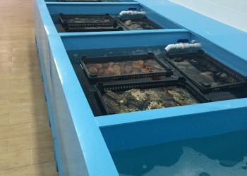 Торговые модули для живой рыбы и океанических продуктов
