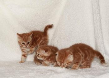 Яркие кошечки