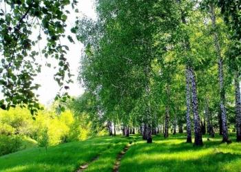 Продаю земельный участок 10 гектар за 700 тысяч рублей.
