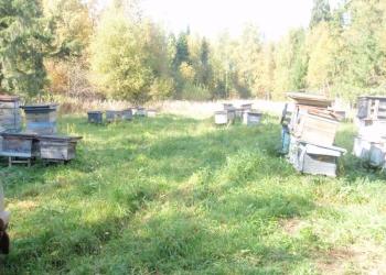 Пасека --- Пчеловодство