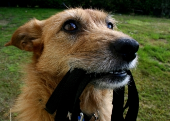 Программа коррекции поведения собаки в городе Альметьевск.