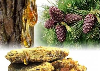 кедровые:орех,масло,живица;мумиё;сера лиственницы