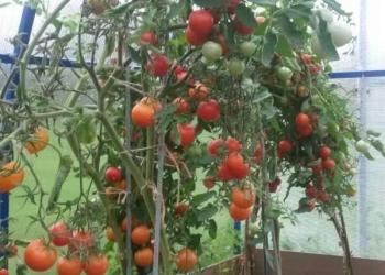 продаю садовый участок