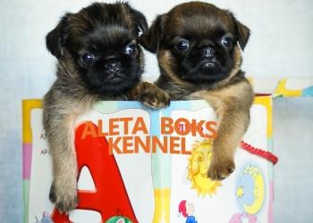 Очаровательные щенки- лучшие для семьи!!!!