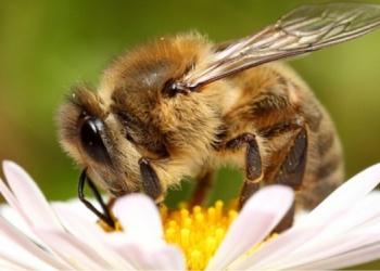 Куплю Мёд продукты пчеловодства Брянск