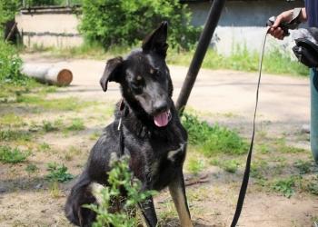 Вежливый и воспитанный пёс особо крупного размера