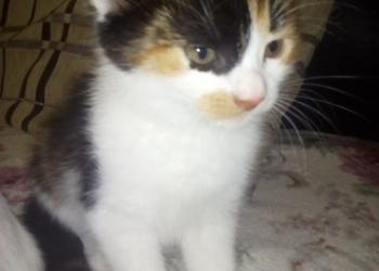 Домашний котенок девочка