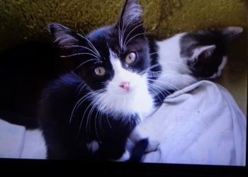 Котята-мальчики 2,5 месяца срочно ищут дом  Красавчики !