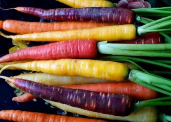 Семена Разноцветной Моркови (и не только!) по Сортам