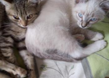 Две веселые кошечки