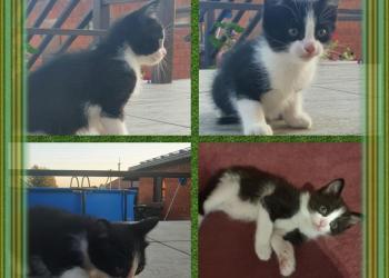 Котенок с призом