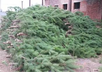 Новогодние елки оптом от производителя