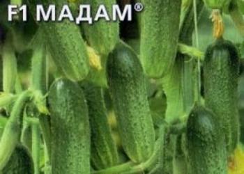 Продам семена-Огурец Мадам F1, устойчивый, дружно урожайный, универсальный