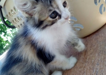 пушистые котята в добрые руки