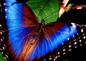 Экзотические Живые Бабочки из Амазонки