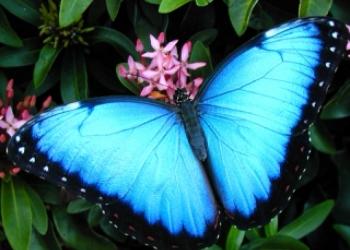 Восхитительные Живые Бабочки из  Индонезии