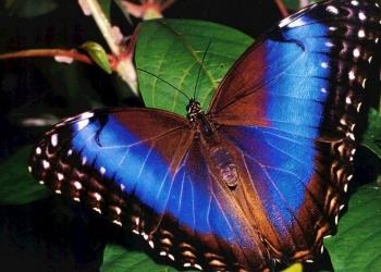 Восхитительные Живые Бабочки из Филиппин