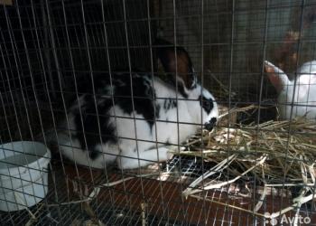 .кролики