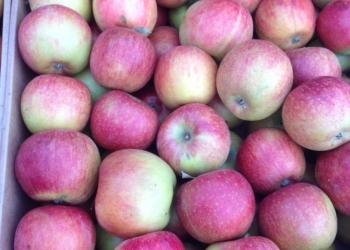 Яблоки с Кубани