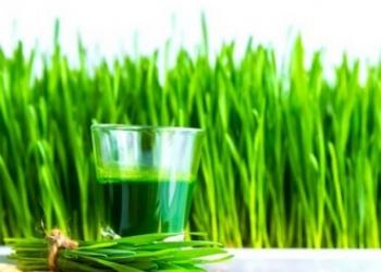 Оборудование для производства сока ростков пшеницы - Wheatgrass