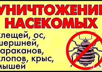 уничтожить  клопы блохи муравьи тараканы мыши