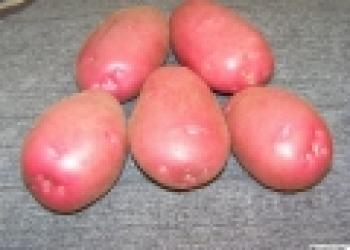 Продам крупный Деревенский  экологически чистый картофель из элитных сортов