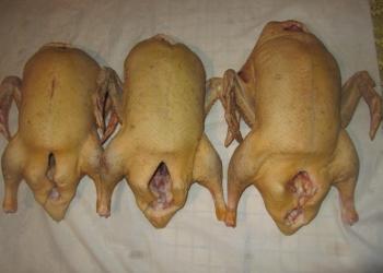 Домашнее мясо гуся, индейки, утки, индоутки, муларда