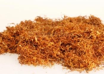 Рассада табак (Верджиния/Берли) без химии и примесей, доставка РФ.