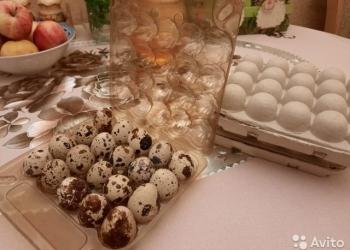 Перепелиные яйца на Дмитриева, крупные (1 упаковка - 20 яиц)