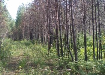 продам земельный участок 21 сотка на 17 км Байкальского тракта п. Еловый