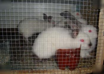 Продам кроликов!!!