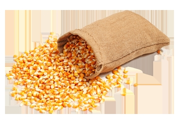 Продам Кукурузу 5000т