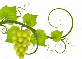 Обрезка Винограда и Кустарника