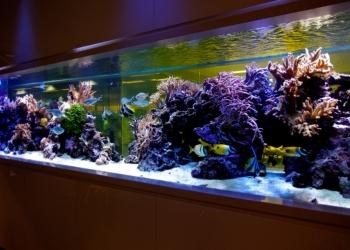 Обслуживание и чистка аквариумов Симферополь, Крым