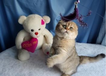 Кошечка в драгоценной шубке