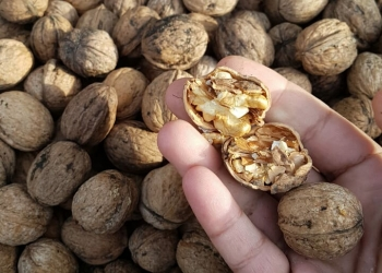 Грецкий орех из Крыма