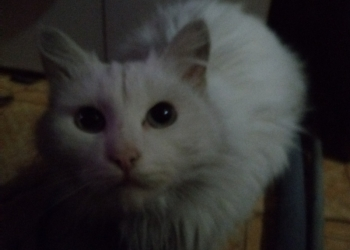 Котика хотят убить так как не нужен, очень жалко( сама забрать не могу(привезу