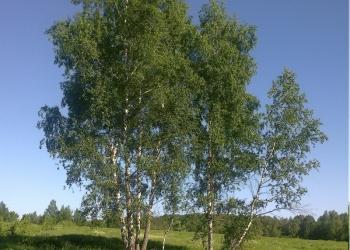 Дача в Коровино, недалеко от водоема