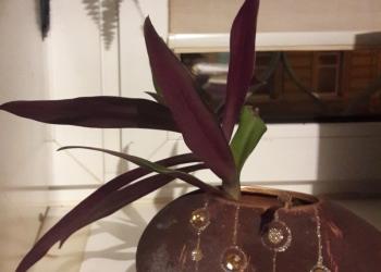 вазочка-горшочек для комнатных цветов