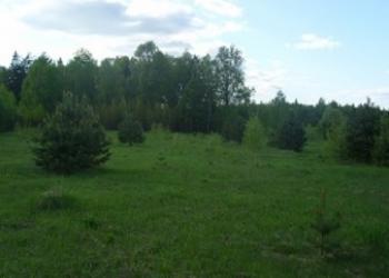 100 соток в сосновом лесу    -