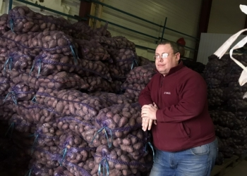 Картофель крупный Red Scarlet, доставка бесплатно