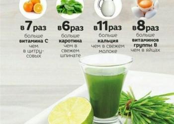 Целебный сок WheatGrass для похудения и от всех болезней из ростков пшеницы